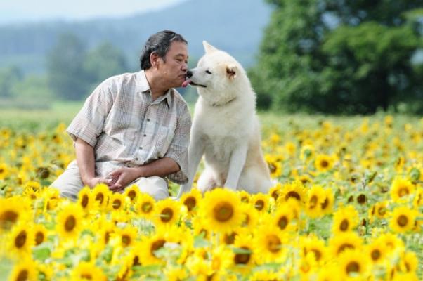 CineMIS_Mostra Cinema Japones_O cão que Guarda Estrelas